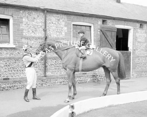 Racehorse What A Myth with Jockey Paul Kelleway